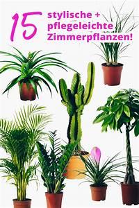 Pflegeleichte Pflanzen Für Die Wohnung : der pflanzen guide 15 stylische und pflegeleichte ~ Michelbontemps.com Haus und Dekorationen
