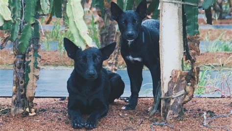 View the faqs for njm homeowners insurance. Taiwan Dog Breed Pictures, Characteristics, & Facts