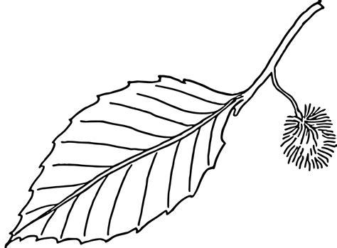 leaf images black  white   clip art