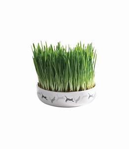 Graine Herbe A Chat : ecuelle en c ramique pour herbe chat sachet herbe chat achat vente herbes chat sur ~ Melissatoandfro.com Idées de Décoration
