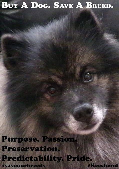 purebred dogs dog