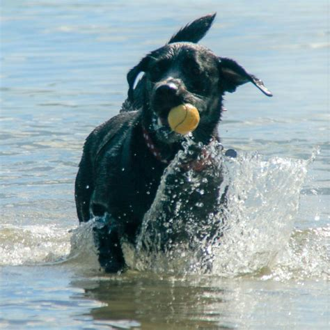 dogs friendly dittiscombe dittiscombe holiday cottages