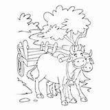 Coloring Bullock Pages Cart Bull Matador Printable Cute Getcolorings Designlooter sketch template