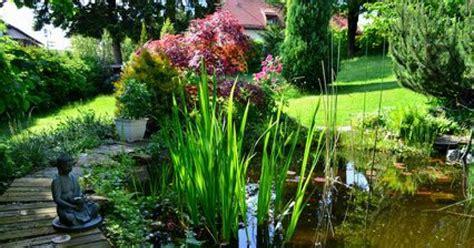 plante de bassin exterieur les plantes aquatiques pour bassin de jardin