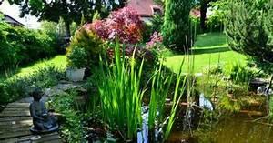 Les Plantes Aquatiques Pour Bassin De Jardin