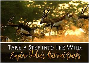 Top 8 National Parks in India to Explore Nature and Wildlife