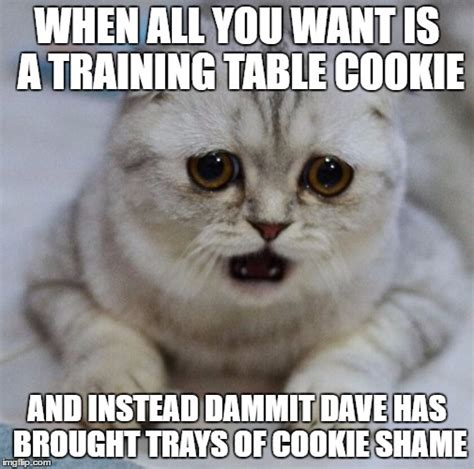 Want A Cookie Meme - image tagged in sad tt imgflip