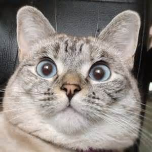 cat pic nala cat cats photo 32964991 fanpop