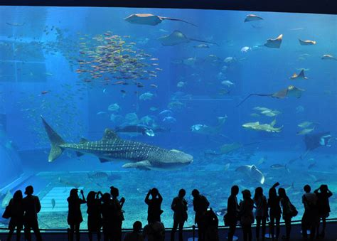 sea okinawa churaumi aquarium traveleering