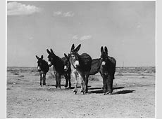 A family of donkeys on a field black and white wallpaper
