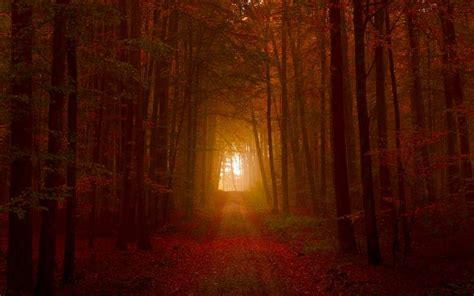 hd deep   autumn woods wallpaper