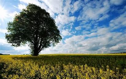 2k Nature 1080p 4k