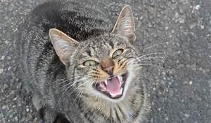 Katzen Fernhalten Von Möbeln : katzen st ndiges miauen kann alarmzeichen sein ~ Michelbontemps.com Haus und Dekorationen