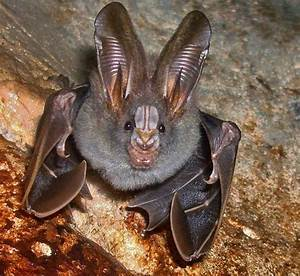 25 of the cutest bat speciesTrue Viral News | True Viral News