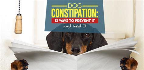 dog constipation  ways  prevent  treat