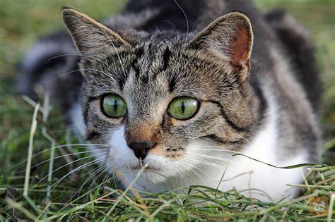 Wenn Die Katze Jagd Auf Jungvögel Macht Lieblingskatze
