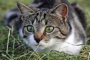 Katze Kotzt Viel : wenn die katze jagd auf jungv gel macht lieblingskatze ~ Frokenaadalensverden.com Haus und Dekorationen