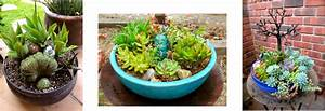 Sustainable Succulent Creations Home