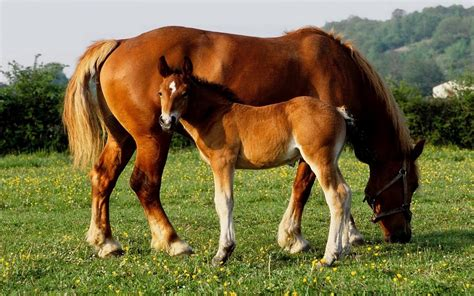 how are horses baby horse wallpapers baby animals