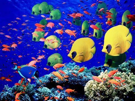 fish wallpaper tropical fish school wallpaper wallpaper wide hd Tropical