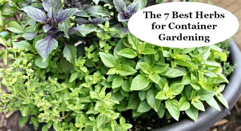where can i buy a bed the 7 best herbs for container gardening