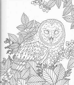 harmony of nature adult coloring book pg 16 color pages With exercise timers