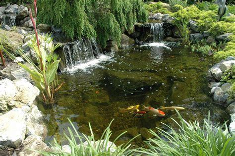 pictures of koi ponds koi ponds