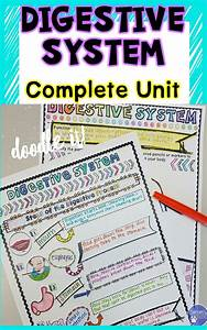 Digestive System Unit Activities