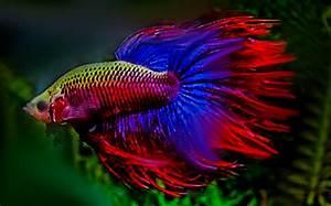 Süßwasserfische Fürs Aquarium : s wasseraquarium der gro e berblick zum thema ~ Lizthompson.info Haus und Dekorationen
