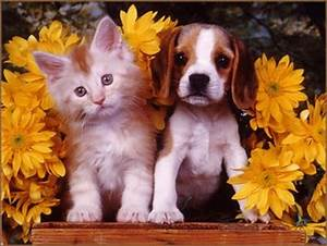 HD Animals: cute dogs and cats together