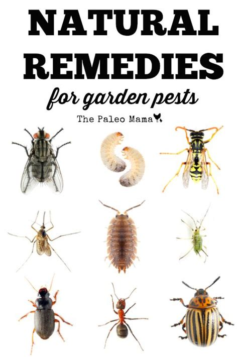 remedies for garden pests the paleo