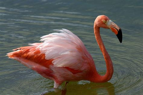 scenic flamingo pictures hd images  photoshoots