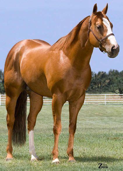 quarter horse horses fast dash american heza johnny leg cash sweep bit fastest si barrel fee stallions racing