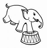 Elephant Coloring Circus Draw Sketsa Easy Gajah Gambar Beginners Drawings Animal Drawing Colouring Animals Line Kumpulan Besar Face Pointing Wearing sketch template