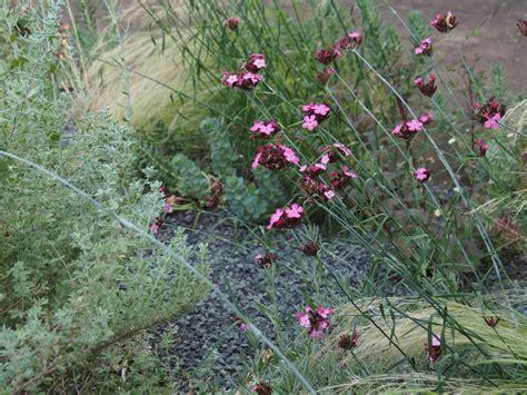 Kiesbeet Mit Gräsern by Kiesbeet Mit Gr 228 Sern 187 Eine Pflanzenauswahl Und Pflegetipps