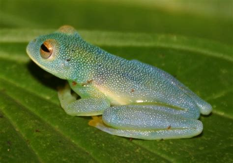 dan's cool blog about frog