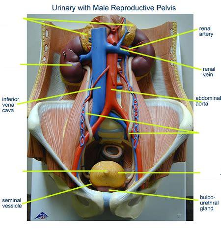 print activity  examining  human torso model