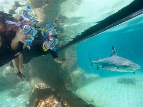 Discovery Cove Orlando Tickets by Buy Discovery Cove Orlando Tickets Orlando Ticket Deals