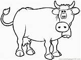Cow Coloring Confused Coloringpages101 sketch template
