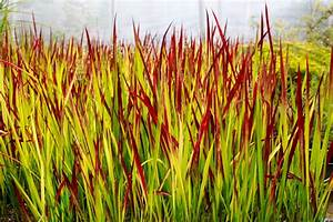 Wann Geranien Pflanzen : bambus pflanzen wann wann ist pflanzzeit f r bambus ~ Lizthompson.info Haus und Dekorationen
