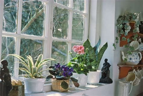House Plants For Window by Winter Care Of Houseplants