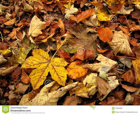 Found on Bing from dreamstime com Autumn leaves Leaves