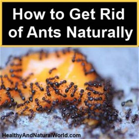 How To Get Rid Of Ants Inside The House by How To Get Rid Of Ants All The House