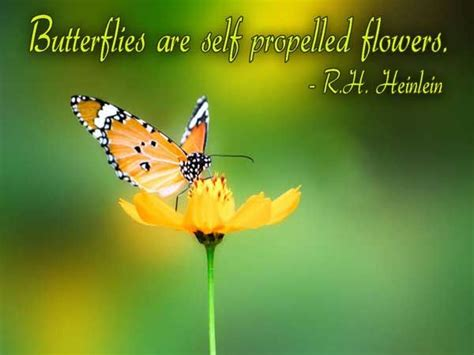butterfly image quotes  sayings page