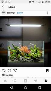 Die Besten Aquarien : die besten 25 aquarium einrichtung ideen auf pinterest ~ Lizthompson.info Haus und Dekorationen