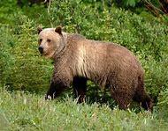Canada Wildlife Animals