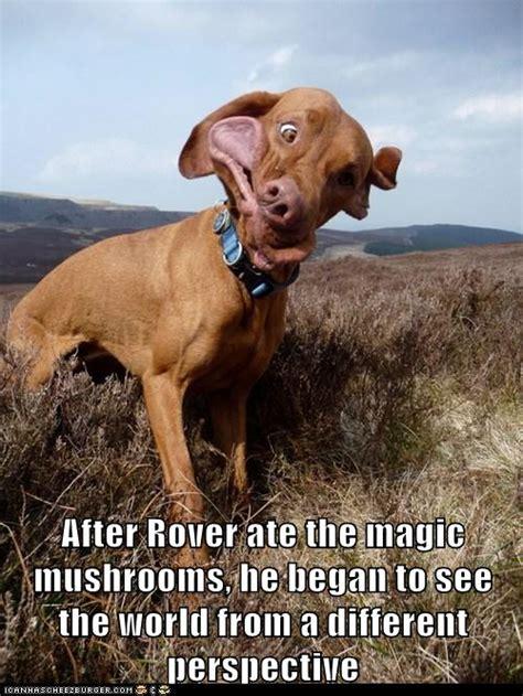 magic mushrooms    hotdog dog pictures funny
