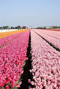 Garten Blumen Bilder : 83 besten fr hbl her im garten bilder auf pinterest fr hling blumen und pflanzen ~ Whattoseeinmadrid.com Haus und Dekorationen