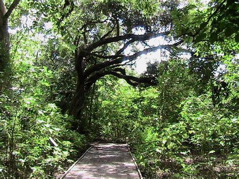 Fileroad Trought Wild Nature Like Junglejpg Wikimedia