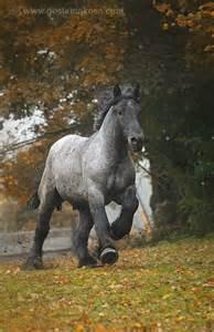 Blue Roan Draft Horse Huge